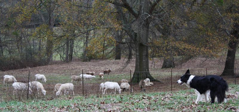 hope_watching_sheep